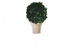 Stabilizovné stomy-Hedera ball - green - 65 cm